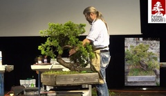 CONGRES BONSAI A NANTES