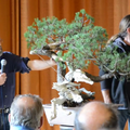 European_Bonsai_San_Show_2013.mp4